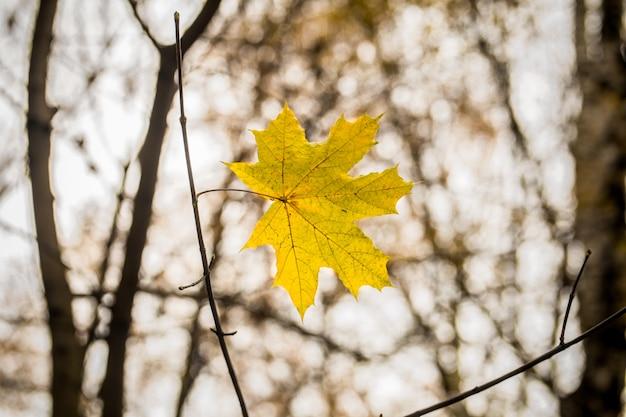 Linda folha amarela pesa-se em um galho