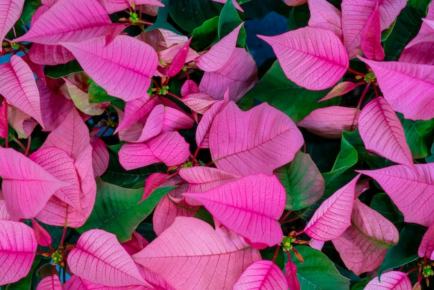 Linda folha verde e rosa