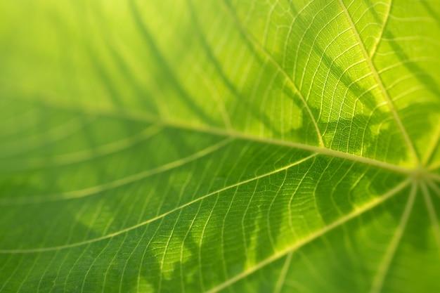 Linda folha verde fresca na natureza. fotografia macro.