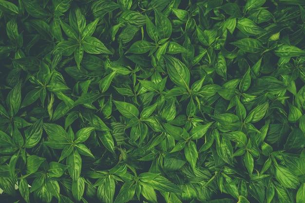Linda folha verde