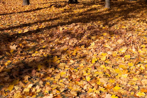 Linda folhagem laranja deitada no chão durante a folhagem de outono no outono