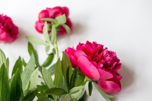 Linda fotografia vintage com flores, pétalas e folhas vista superior plana leiga. foto minimalista para blogs, sites, plataformas de mídia social.