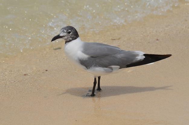 Linda gaivota olhando para a água com as ondas rolando na praia.