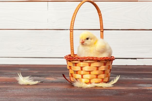Linda galinha no ninho