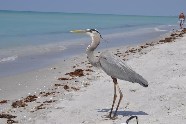 Linda garça-real em pé na praia aproveitando o clima quente