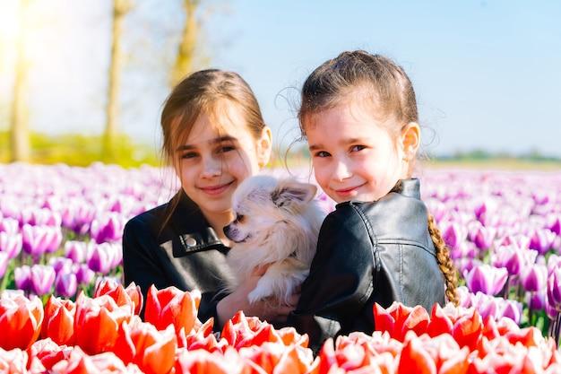 Linda garota adolescente com cabelo comprido, cheirando a flor de tulipa em campos de tulipa na região de amsterdã, holanda, holanda. paisagem mágica da holanda com campo de tulipas na holanda trevel e o conceito de primavera.