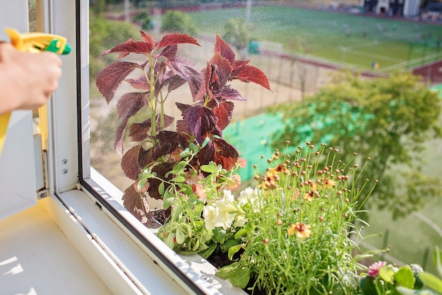 Linda garota ajudando a cuidar das plantas caseiras no conceito de pais de planta de janela da varanda