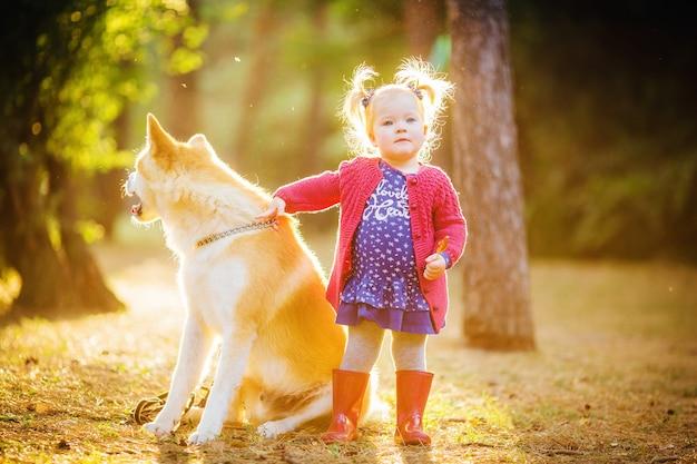 Linda garotinha com um cachorro akita inu na floresta de outono