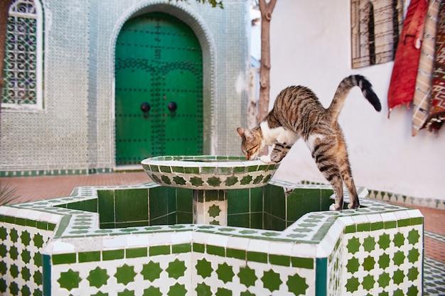 Linda gatos vadios dormem nas ruas de marrocos