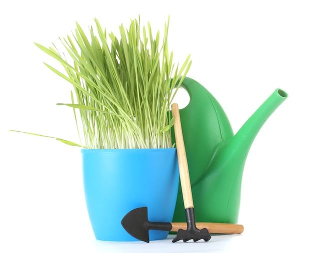 Linda grama em um vaso de flores, regador e ferramentas de jardim em branco