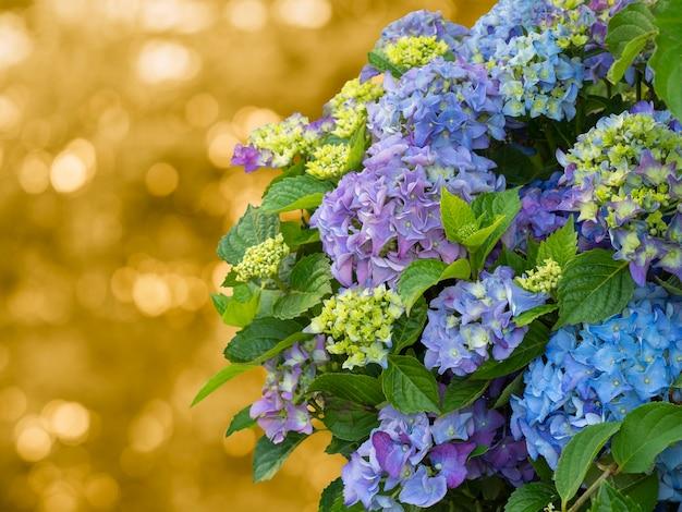 Linda hortênsia azul, copie o espaço. fundo natural artístico.
