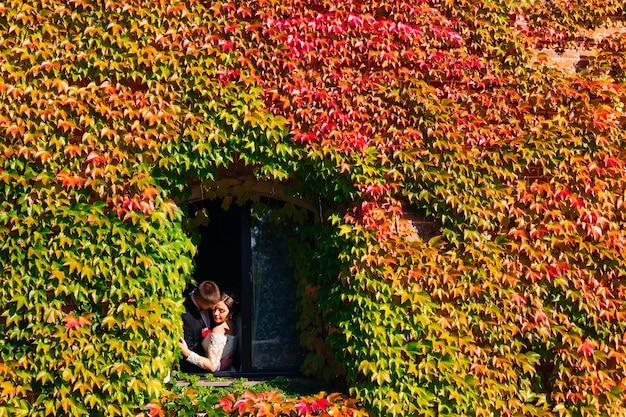 Linda janela em uma parede coberta por uma densa hera verde e recém-casados querem se beijar