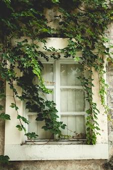 Linda janela velha coberta de hera verde