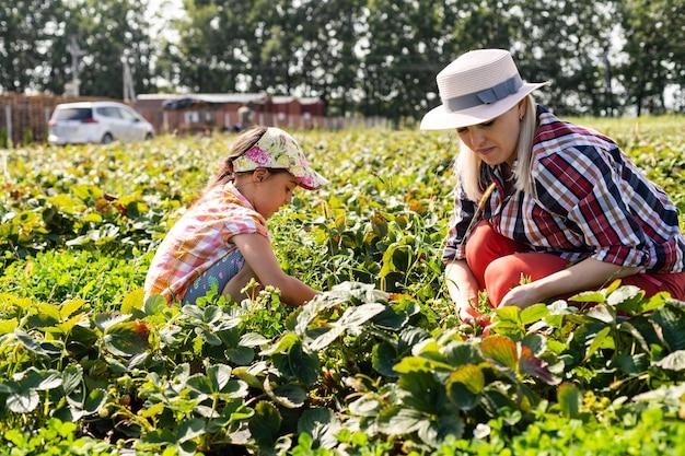 Linda jovem mãe caucasiana com sua filha colhendo morangos no campo