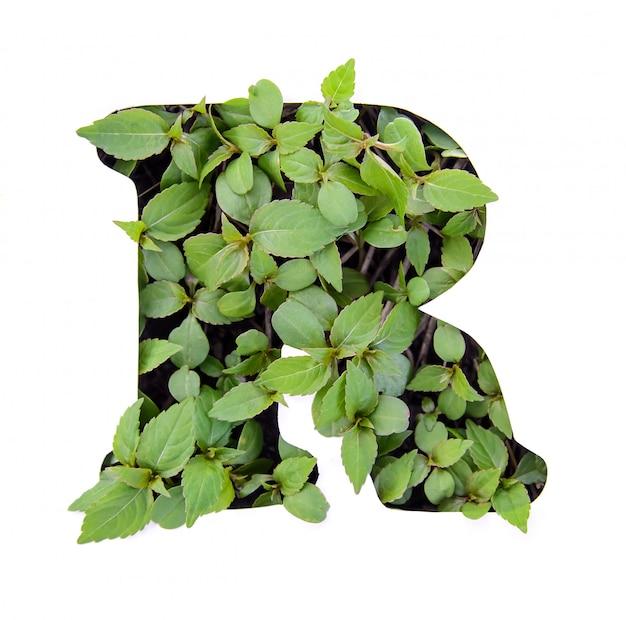 Linda letra r do alfabeto inglês feita de folhas verdes frescas em estêncil de papel branco