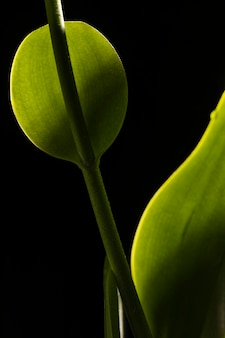 Linda macro folha verde