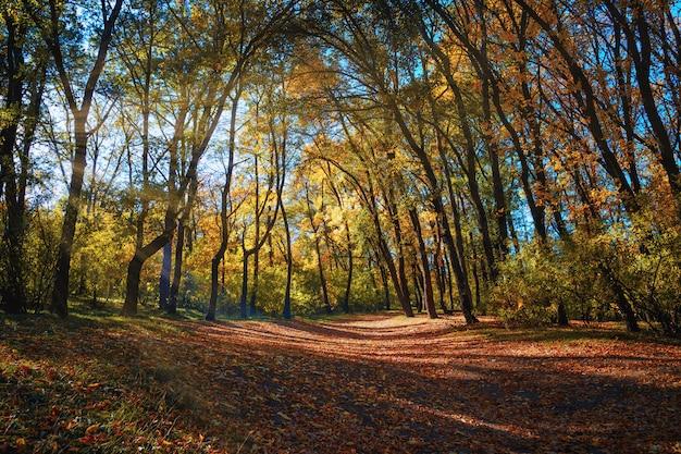 Linda manhã na floresta nublada de outono com raios de sol