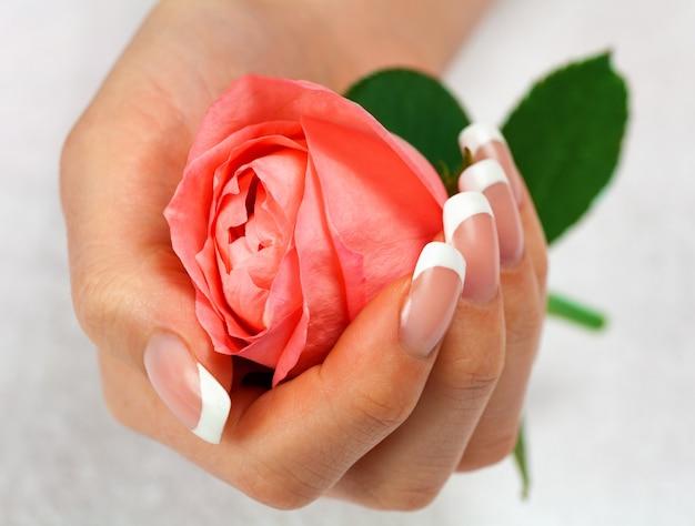 Linda mão feminina com manicure francesa segurando uma rosa