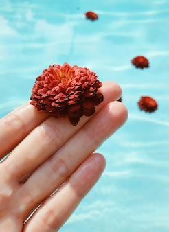 Linda mão feminina segurando uma flor vermelha de água azul. conceito de relaxamento e spa.