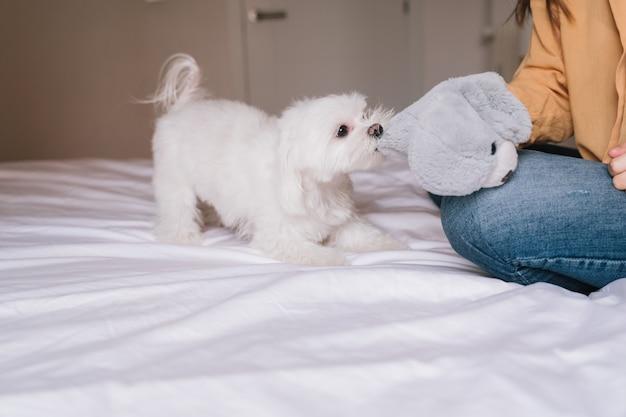 Linda mulher brincando com seu cachorro fofo em casa