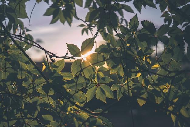 Linda paisagem ao ar livre