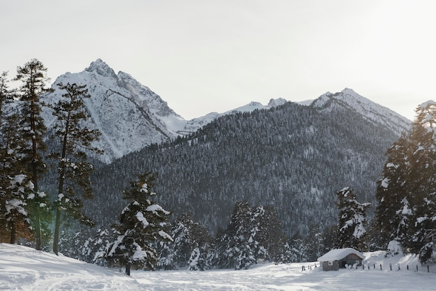 Linda paisagem de inverno