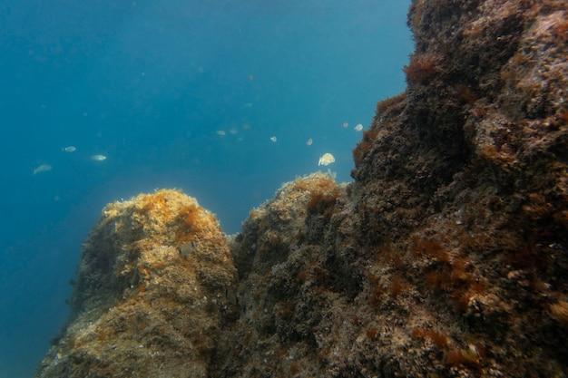 Linda paisagem subaquática