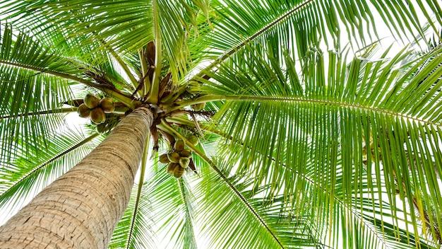 Linda palmeira
