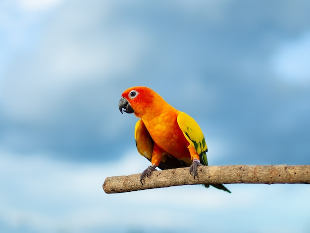 Linda papagaio colorido sentado