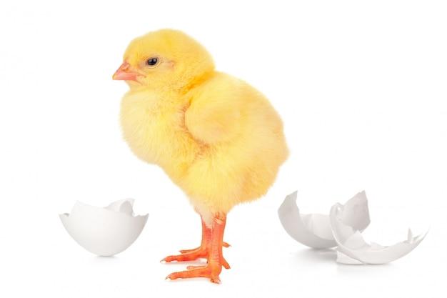 Linda pequena garota e casca de ovo isolada
