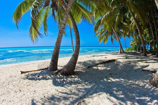 Linda praia com palmeiras