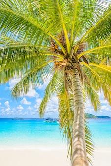 Linda praia tropical