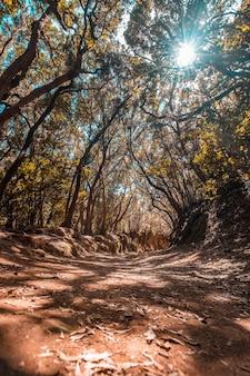 Linda trilha para caminhada na floresta de anaga, no norte de tenerife, na espanha