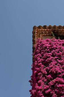 Linda vista com flores no prédio