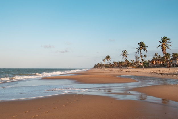 Linda vista de palmeiras na praia do norte do brasil, ceará, fortaleza / cumbuco / parnaíba