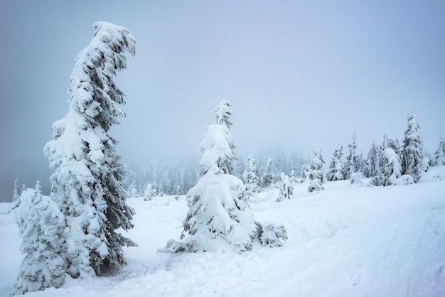 Lindas árvores de abeto nevado em toda a paisagem nevada