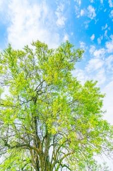 Lindas árvores se ramificam no céu azul.