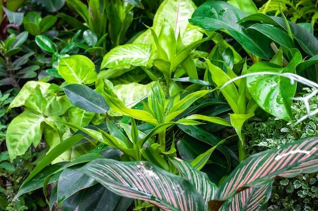Lindas árvores verdes decorativas no jardim botânico de perto