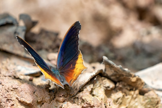 Lindas borboletas. venha comer minerais