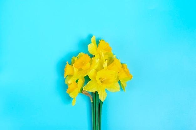 Lindas flores amarelas de narcisos em um fundo azul flat lay