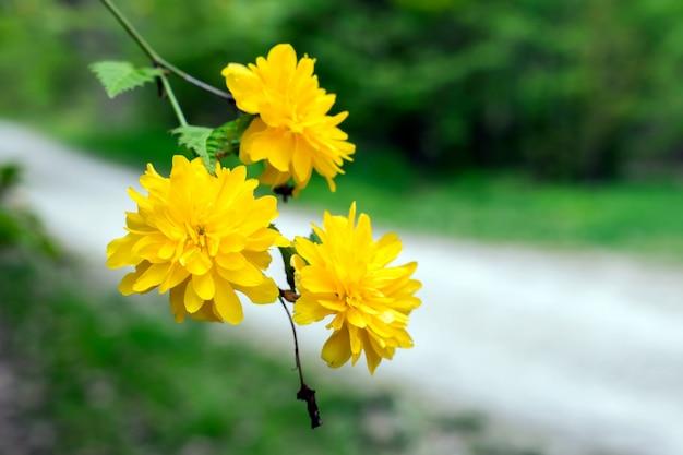 Lindas flores amarelas em um ramo