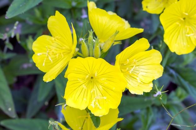 Lindas flores amarelas no jardim