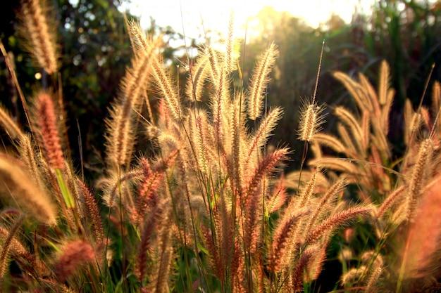 Lindas flores ao nascer do sol escuro