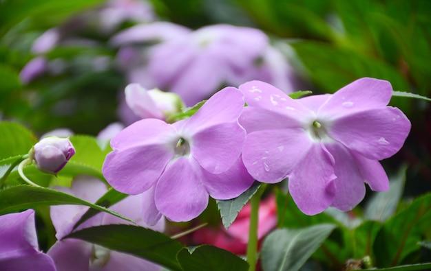 Lindas flores azuis pela manhã no jardim