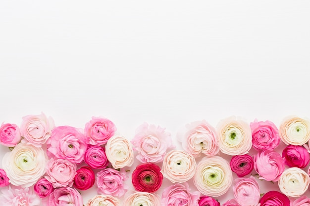 Lindas flores coloridas de ranúnculo em um branco. cartão de primavera.