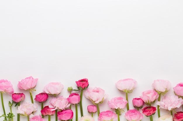 Lindas flores coloridas de ranúnculo em um fundo branco. cartão de dia dos namorados.