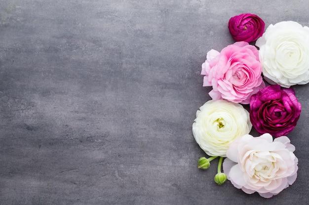Lindas flores coloridas de ranúnculo em um fundo cinza
