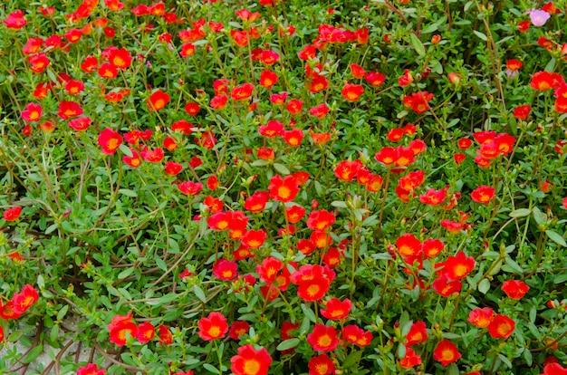 Lindas flores coloridas no jardim.