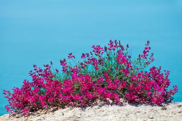 Lindas flores contra o mar.