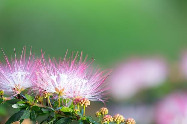Lindas flores cor de rosa desabrochando na natureza